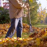 Земля у леса: убирать траву и мусор нужно с ранней весны до глубокой осени
