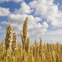 Подписан закон о поддержке переработчиков сельхозпродукции